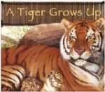 a-tiger-grows-up