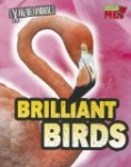 brilliant-birds