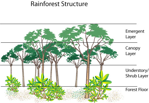 rainforest-diagram
