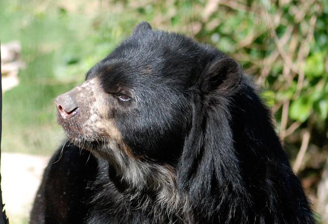 bear-spec